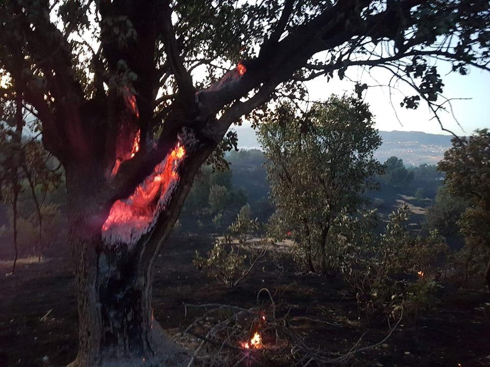 Des centaines d'arbres et plus de mille hectares de vignes sont tombés à ırnak © Facebook