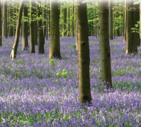 Een nieuwe lente, een nieuw leven voor onze parochies... © Annie Casaer