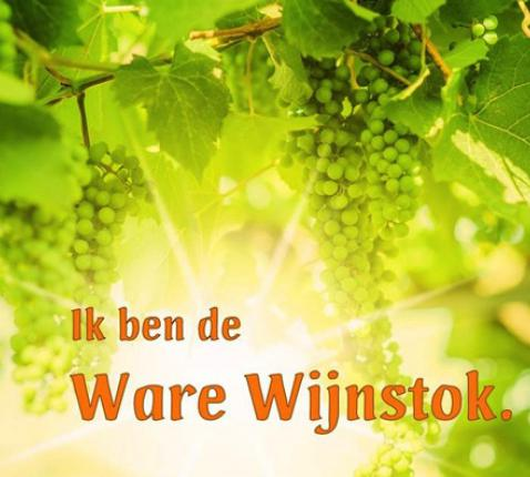 Ik ben de Ware wijnstok © Peter Engelbert