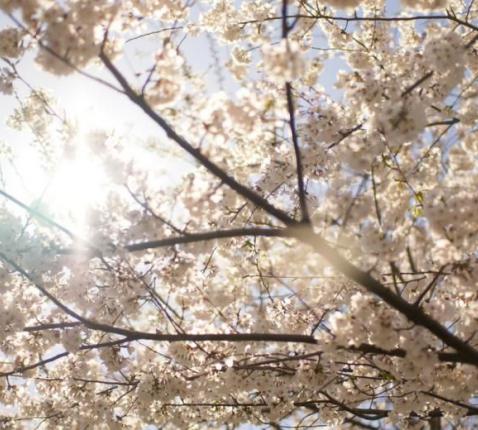 Livinuskoor zingt virtueel Pasen 2020