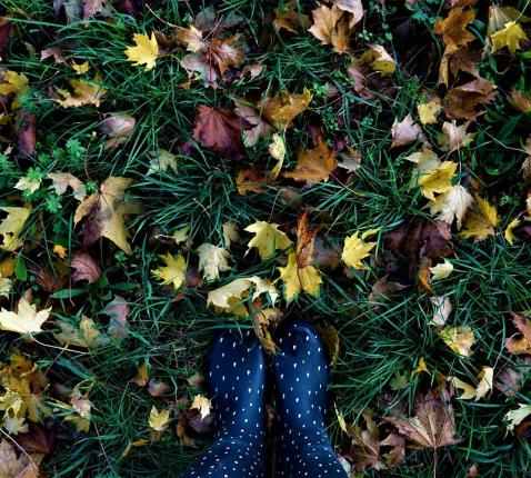 herfst © Image by Mylene2401