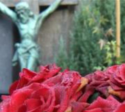 Kruisbeeld-roos © Kath. Nederl.