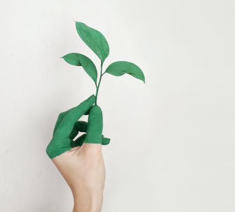 Ecokerkraad © Pexels