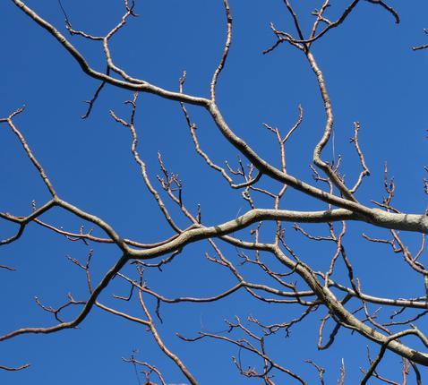 'Met een boom heb je altijd iets om naar uit te kijken.' © CC Pexels