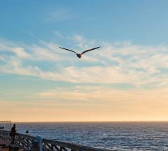 'Met een ziel als een vogel zo vrij.' © Flickr / Tim Rochte
