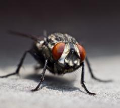 Moet een christen beter weten dan een vlieg doodslaan? © Jacob Martin