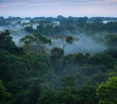 Het regenwoud van de Amazone beslaat bijna vijf procent van de aarde en meer dan tweederde van het Zuid-Amerikaanse continent   © Vatican Media