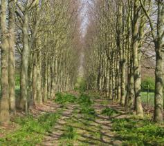 Een dreef in fris lentegroen, een weg om te gaan?  © JH