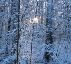 Nog wat onwennig kleurt de morgen de eerste dageraad. Stilte sluimert als een ongekend gebed tussen de bomen in wintertooi. Aarzelend bekleedt het nieuwe jaar zich met het wit van vrede.