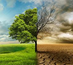 Laudato Si'-jubileum, voor de planeet en al wat erop leeft.