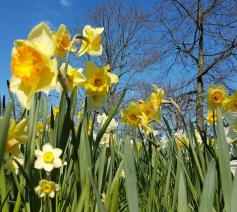 lentetuin- Pasen © aangeleverd door bisdom
