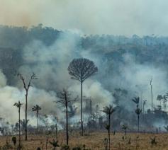 Honderden brandhaarden teisteren het Amazonewoud © Vatican Media