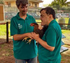 In De Ark Rome verschijnen 3 kippen. En of ze aaibaar zijn! © Sara Loobuyck