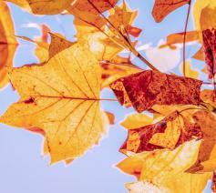 herfst © (c)Pixabay