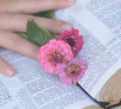 """""""Het heerlijke van de Bijbel is dat de teksten je telkens weer op een nieuwe manier kunnen raken, intrigeren en inspireren."""" © Pixabay"""