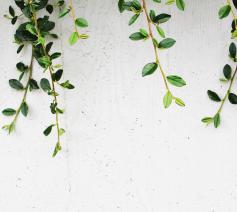 'Ik heb er gewoon een stel groene takjes voor nodig en een hart dat naar God reikt.' © Pixabay