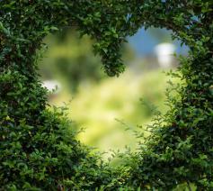 Als je met liefde door een muur van onbegrip heen kijkt. © CC Pexels