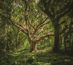 'Zoals twee oude bomen in elkaar verstrengeld kunnen zijn, zo zijn mijn ouders met elkaar vergroeid geraakt.' © Pexels