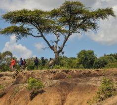 De Great Green Wall in de Sahel is goed op weg om het omvangrijkste wereldwonder te worden. © Aaron & Lisa / Flickr CC