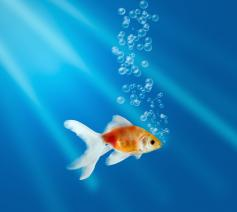 Als een vis in het water © zdb