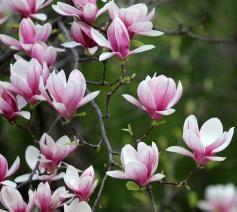 'We zien opeens elk nieuw knopje of blaadje in ons tuintje of bij onze kamerplanten.' © Pixabay