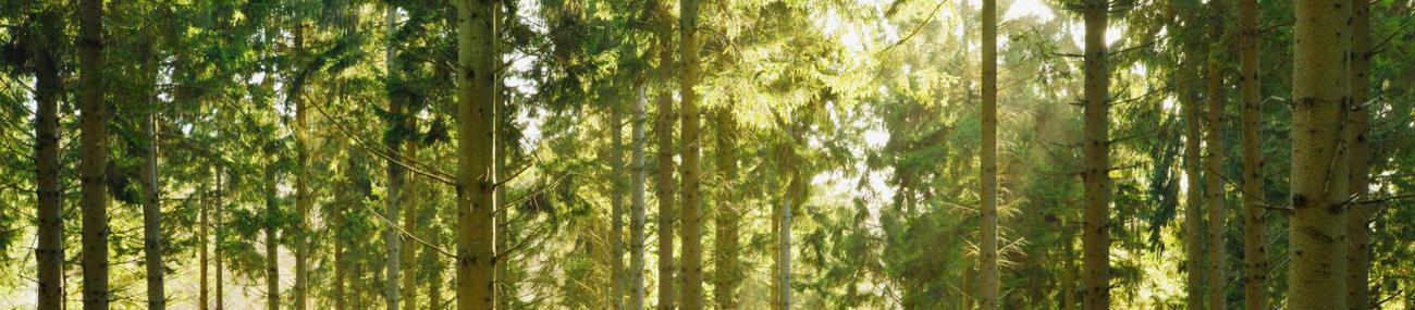 'Kerstbomen' in volle zon. © CC Scott Wylie