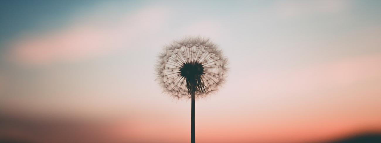 CCV studiedag 'de goede dood' © pixabay