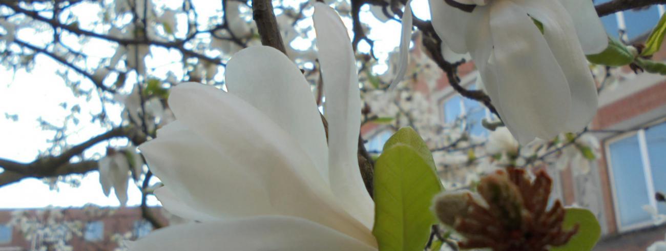 bloesem in de tuin van Rabboeni - nieuw leven! © zrs bernardinnen