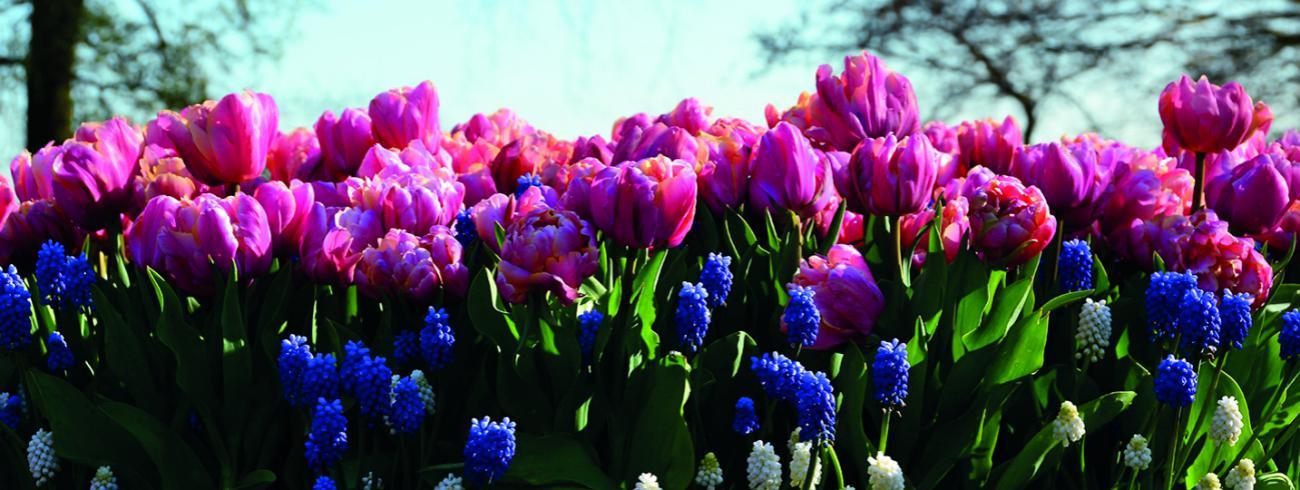 Bloemen voor de troostplek