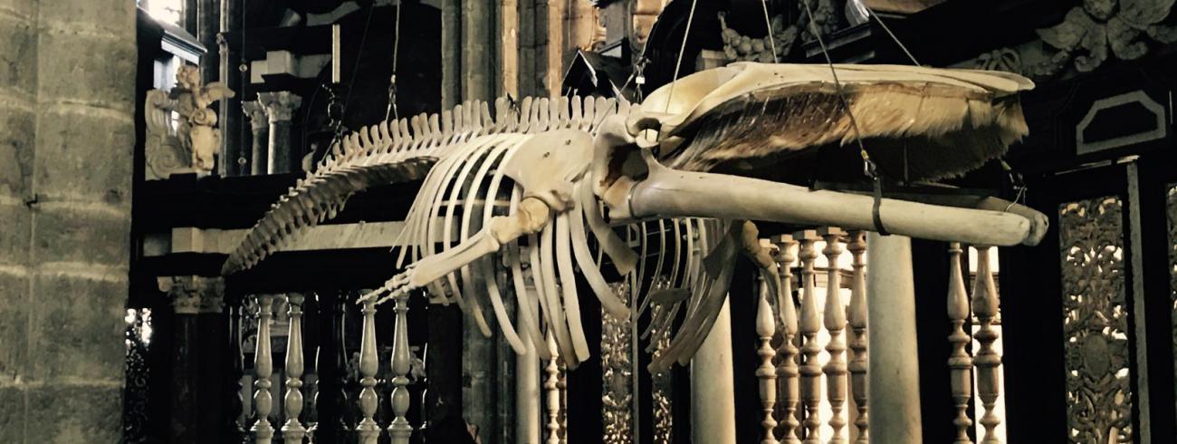 Vinvis Leo in de kathedraal © bisdom Gent