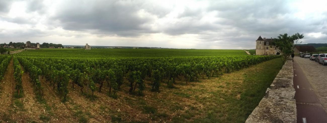 Zicht op de ommuurde wijngaard in Vougeot. © Wikipedia