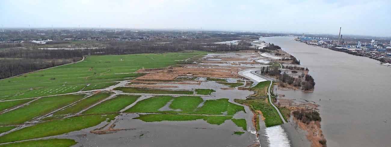 In januari stroomde het Scheldewater, zoals voorzien, over de dijk in Kruibeke. © © Wim Robberechts