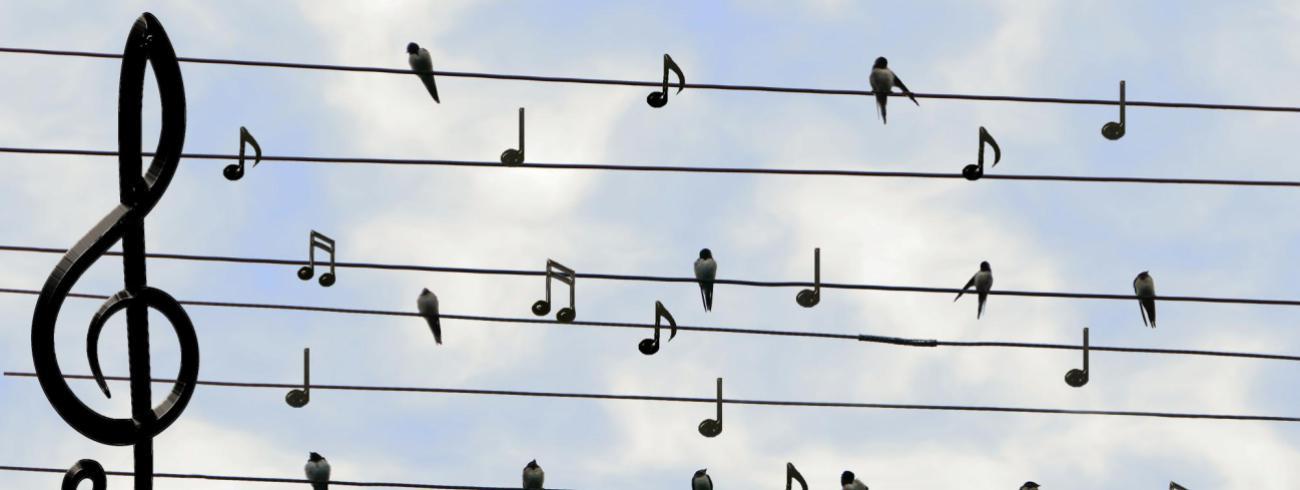 concerten met zin © Pixabay