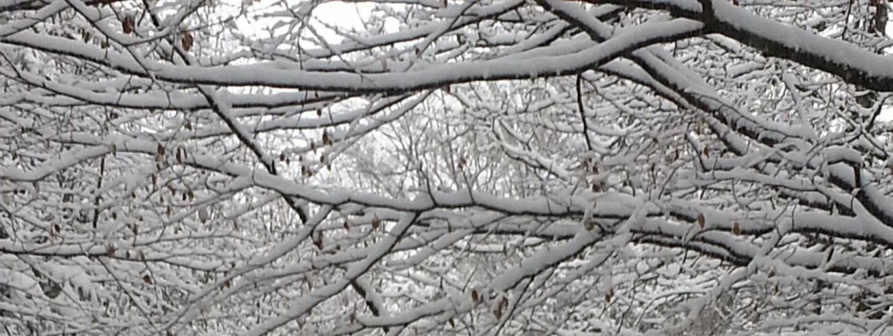 Sneeuw © Ilse Van Halst