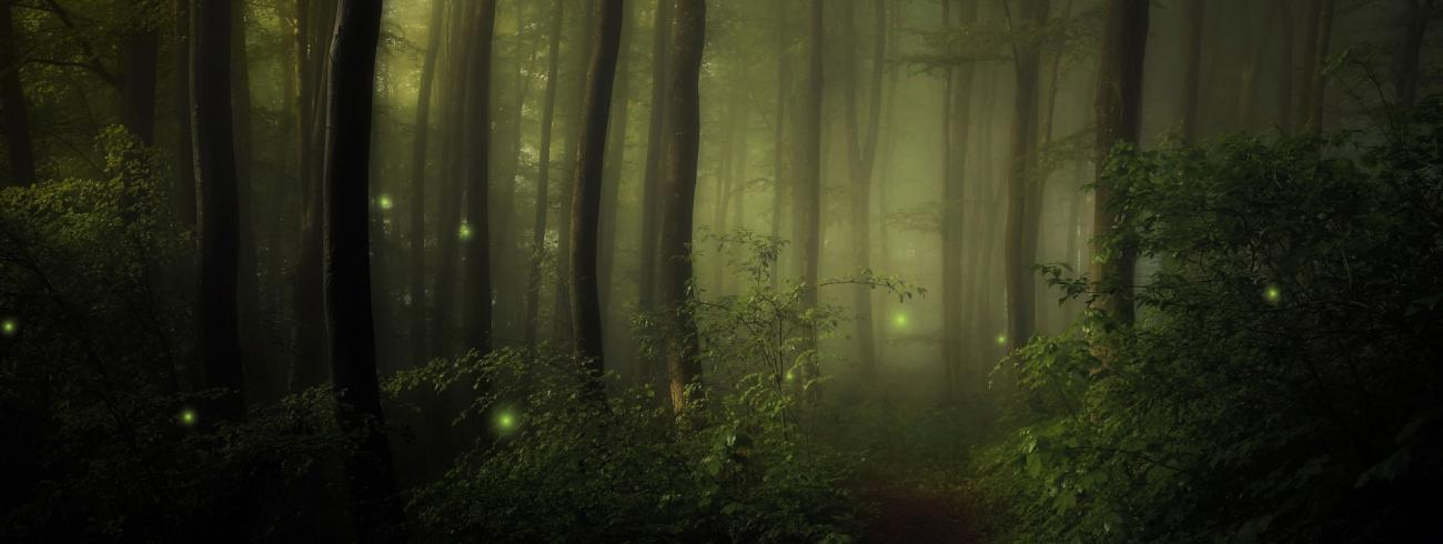Het bos van Hildegard © Canva