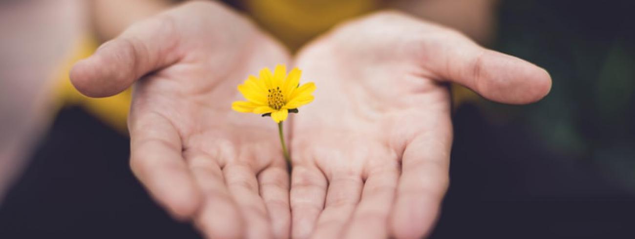 Handen © Lina Trochez, via Unsplash