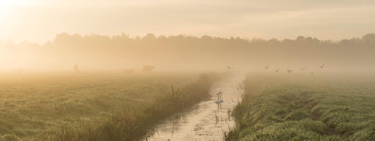 ochtend © Sonja Bron