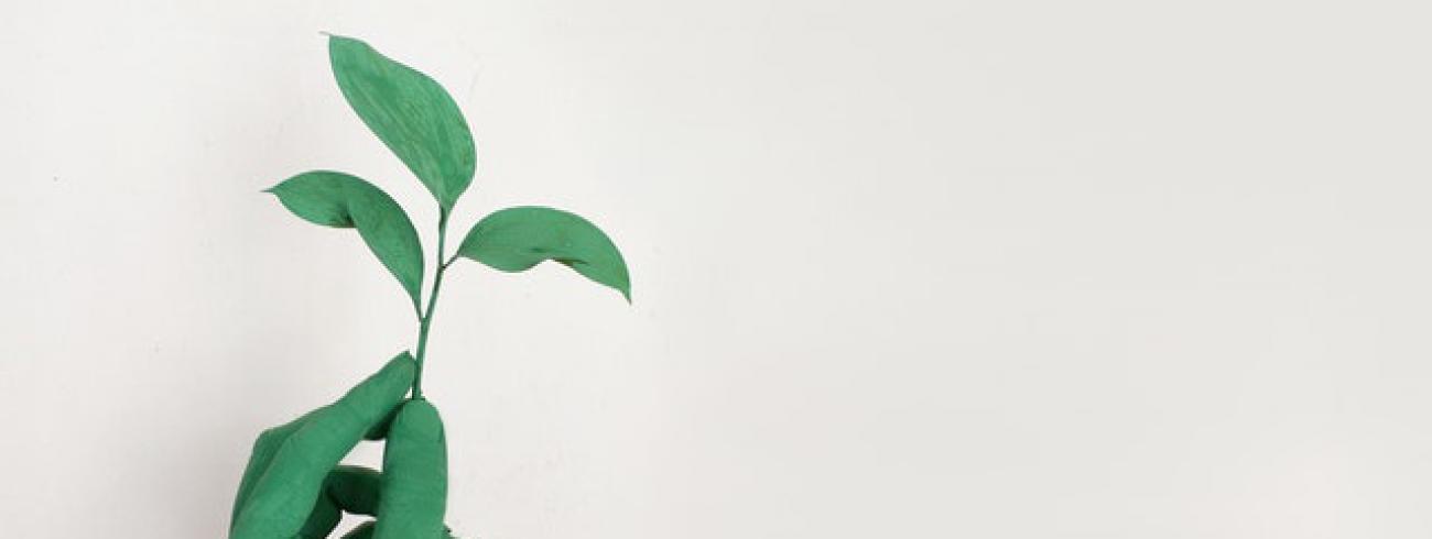 groen blad © Alena Koval
