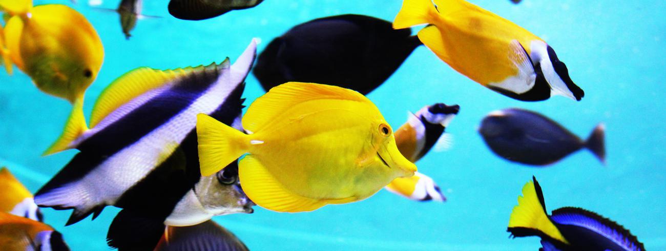 een School vissen © •http://pixabay.com/nl/