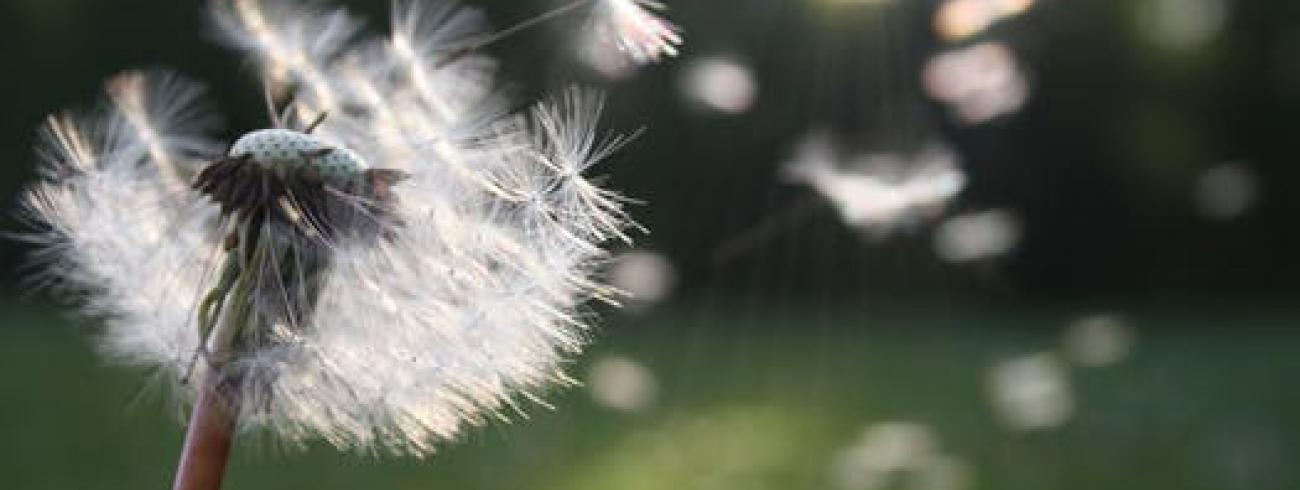 Blazen om te groeien © pexels.com