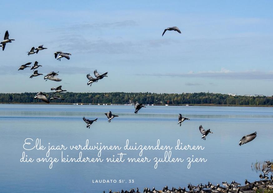 Laudato Si' - maand van de Schepping - dag 14 © Vicariaat Brussel - Pixabay