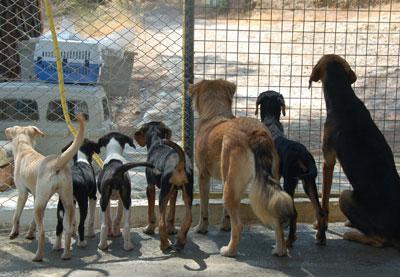 We mogen helpen de dieren verzorgen en zelfs uitlaten!