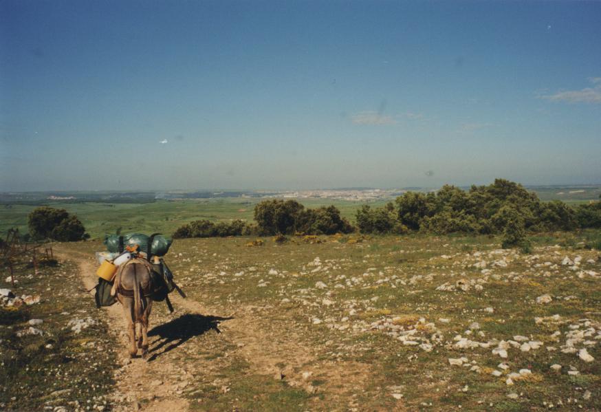 De camino op het tempo van de ezel © Jenny De Jagere