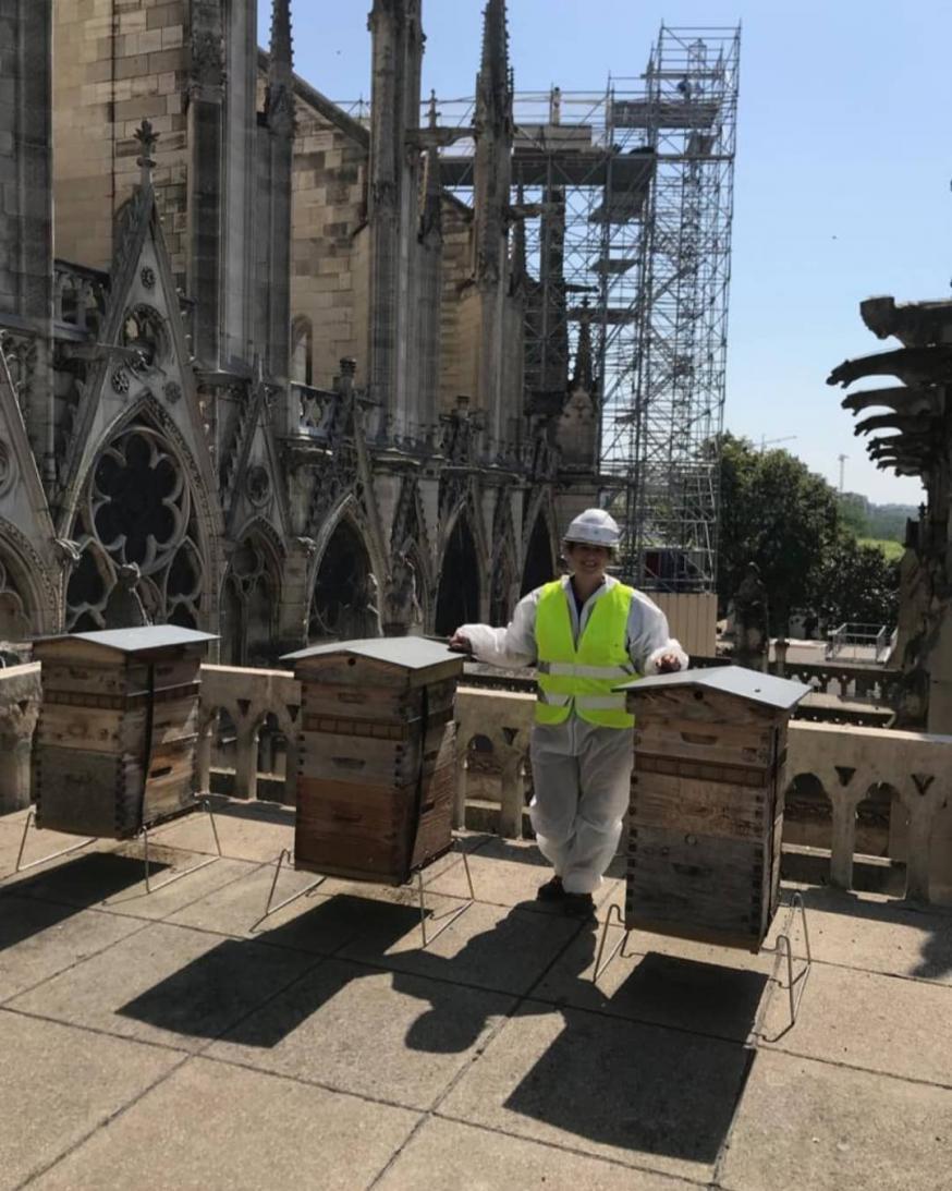 De bijen van de Notre Dame overleefden de brand in april 2019. © Instagram Beeopic