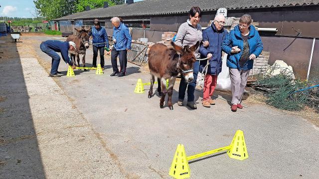 Een workshop bij ezelopvangcentrum Anegria deze zomer. Heeft de beste therapeut inderdaad een vacht en vier poten, zoals het motto daar luidt? © De Companjong