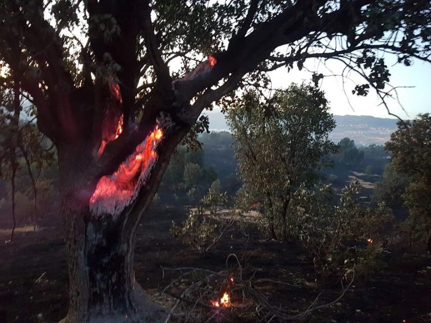 In Şırnak sneuvelden honderden bomen en meer dan duizend hectare wijngaard © Facebook