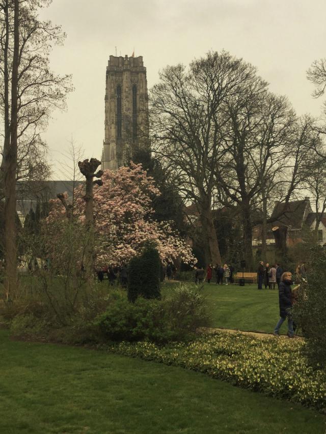 Prachtig zicht van in de tuin op de grootse toren van de Sint-Romboutskathedraal © communicatiedienst aartsbisdom Mechelen-Brussel