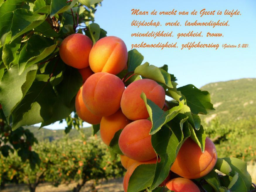 Vruchten van de Geest 9