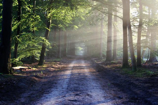 De weg die voor ons ligt... © pexels