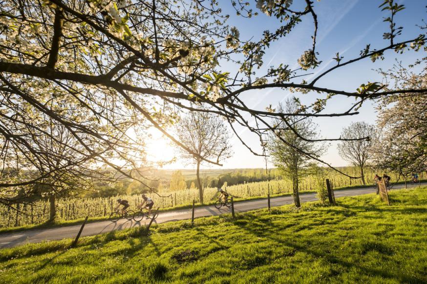 Fietsen tussen boomgaarden, door het glooiend haspengouw, dàt is Ter Lande!